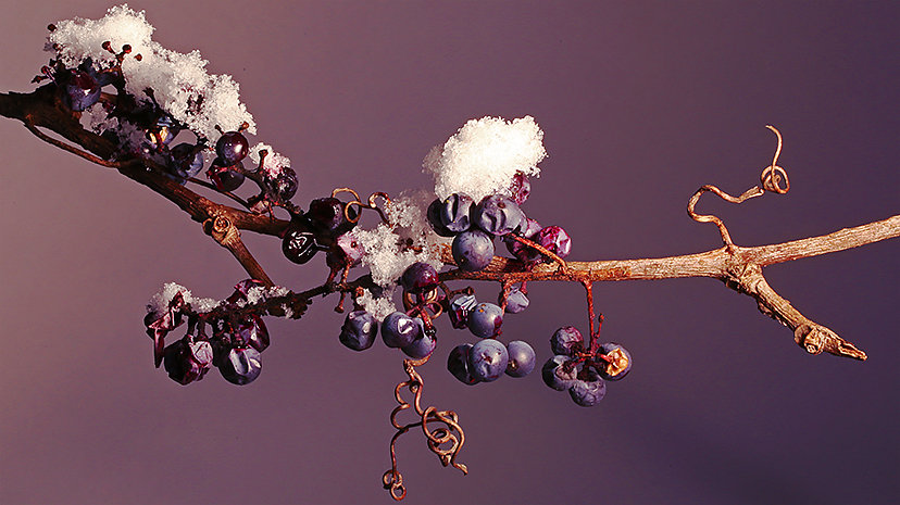 2C7A8705-wild-winter-grapes-FB-cover.jpg